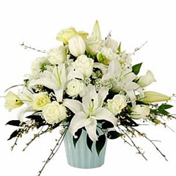Karýþýk beyaz çiçekler