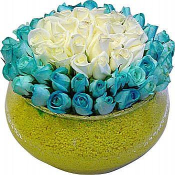 Mavi güller ve beyaz güller